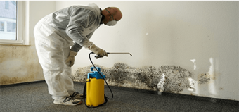 The Hidden Dangers of Mold in Your Home
