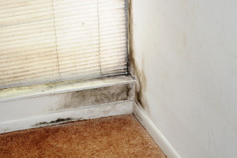 How to Prevent the Growth of Mould in Your Home