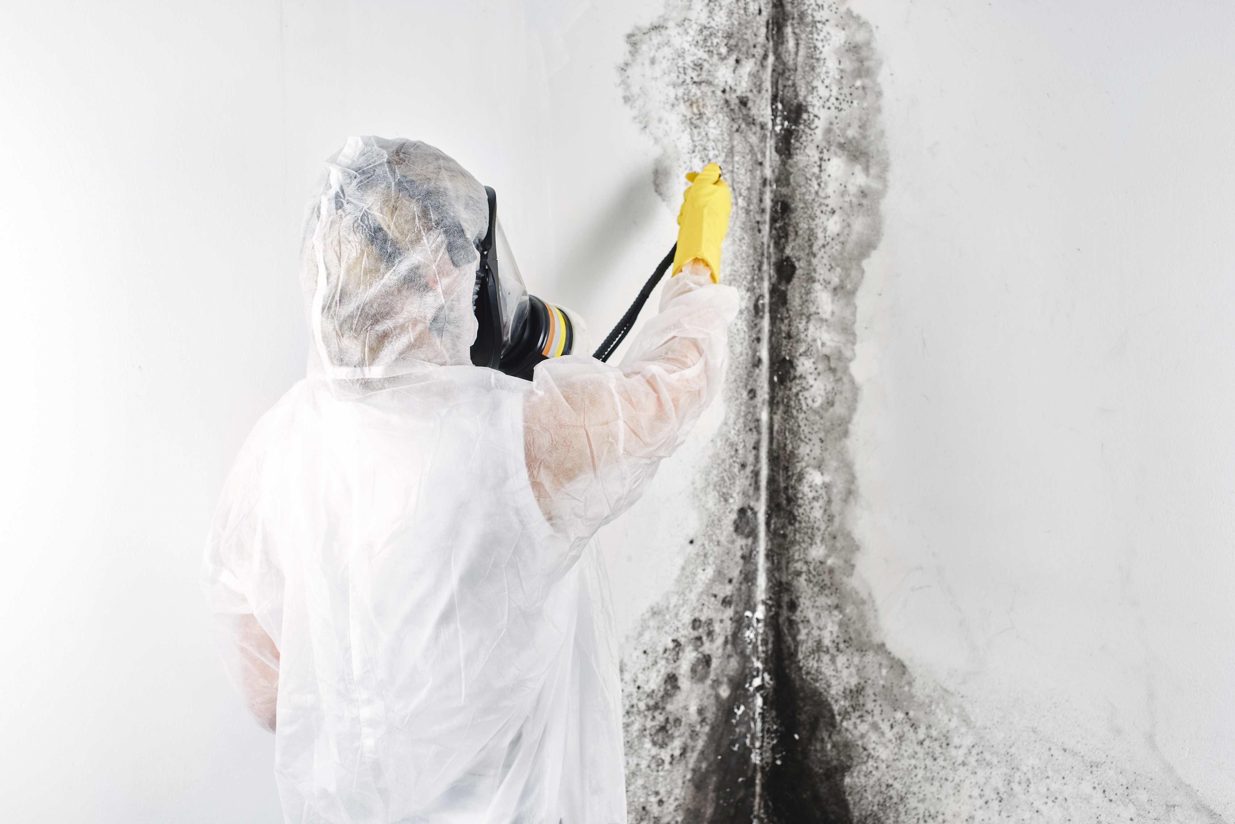 Mold Removal and Inspection in Toronto