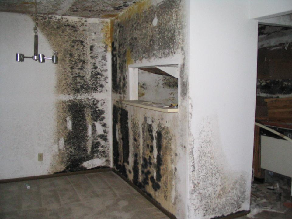 Black Toxic Mold Restoration Services