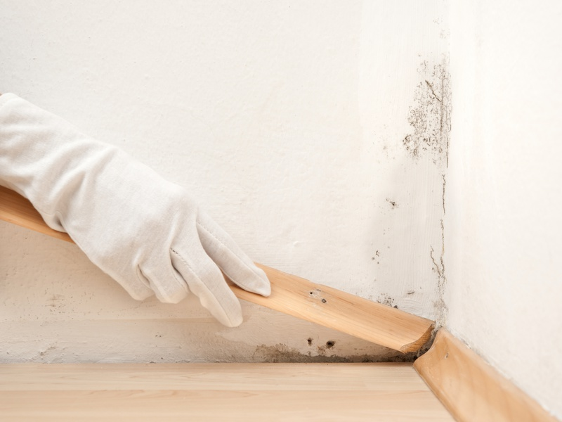 Mold Removal, Mold Remediation, Mold Procedure, Mold Process, Safe Mold Removal, Mold Tips, Get Rid of Mold, Mold Dangers