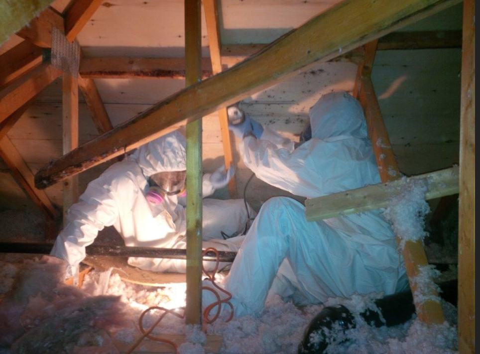 asbestos in sherwood park, asbestos removal process sherwood park