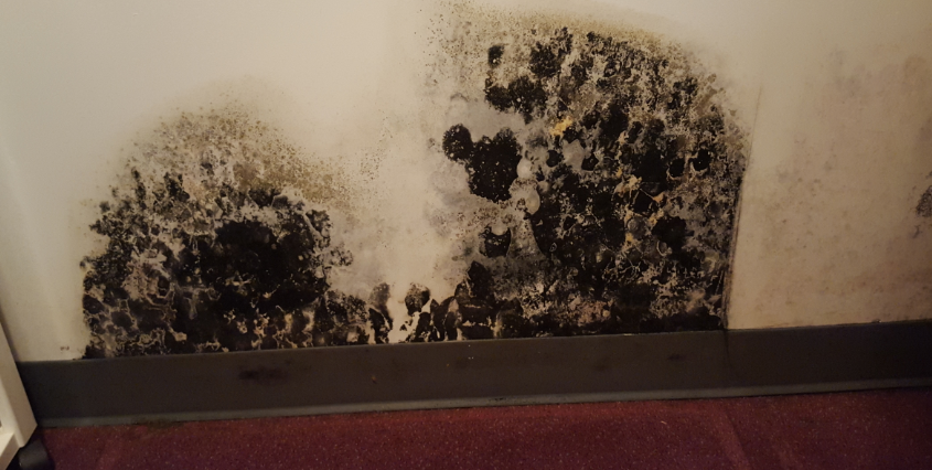Black Mold Toxic What Is Does Look Like