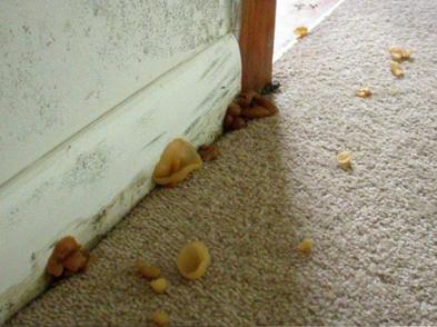 Mushrooms Growing In Home