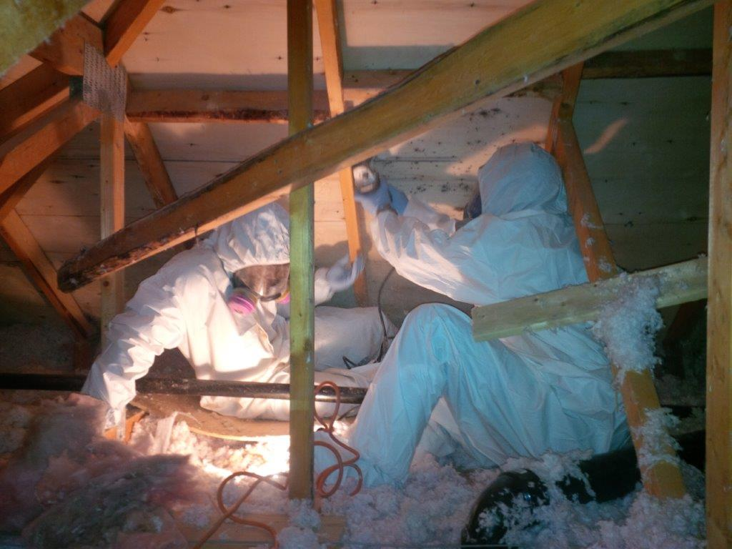 Mold Removal & Remediation Services