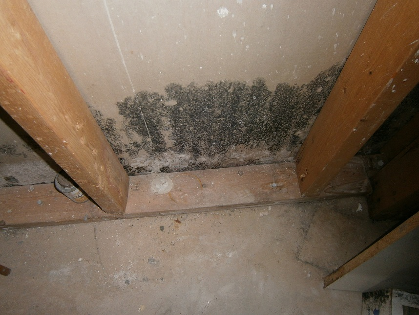 Vancouver Mold Removal Amp Remediation Canada S