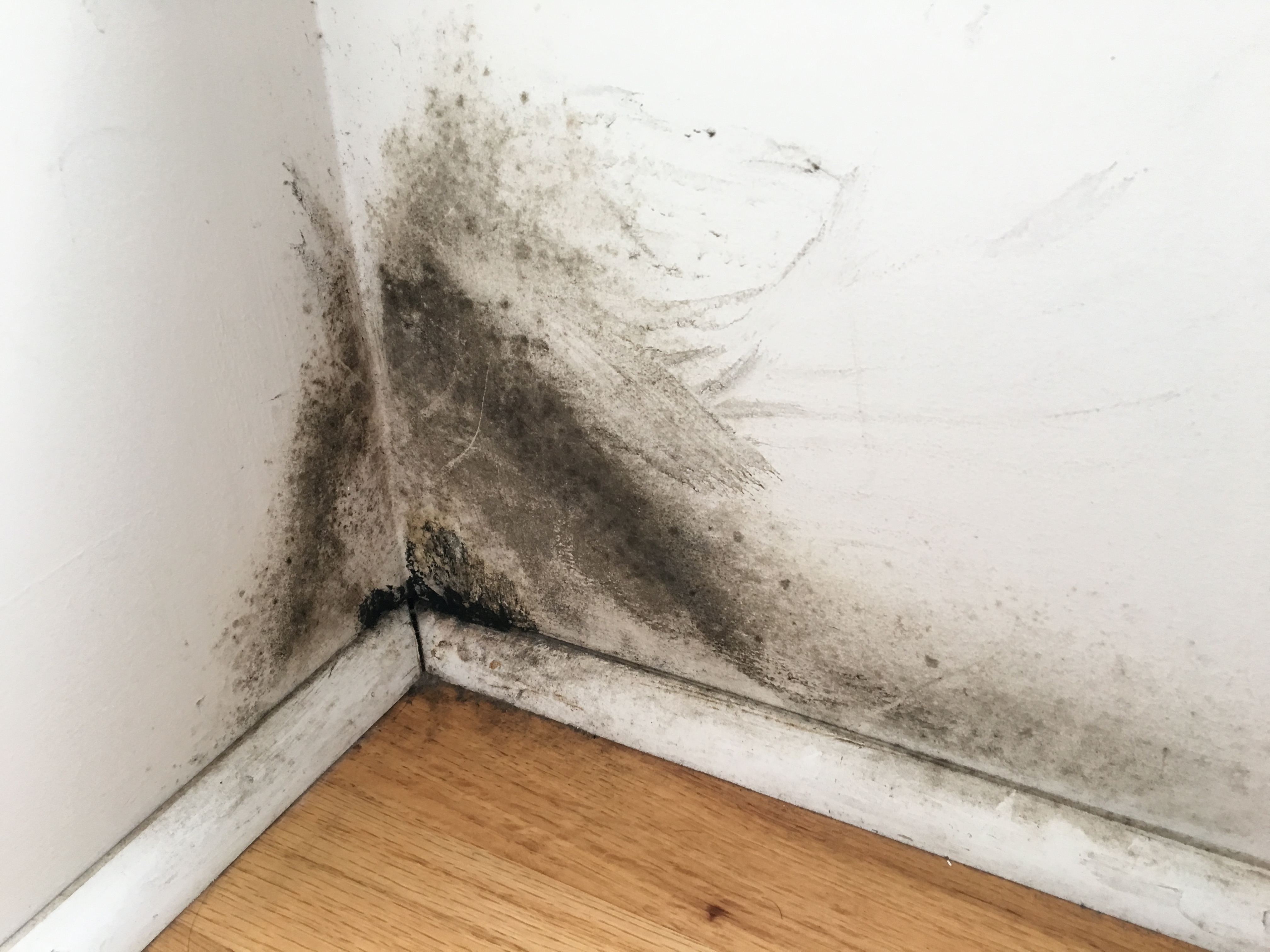 Mold Removal Amp Remediation Services In Kanata