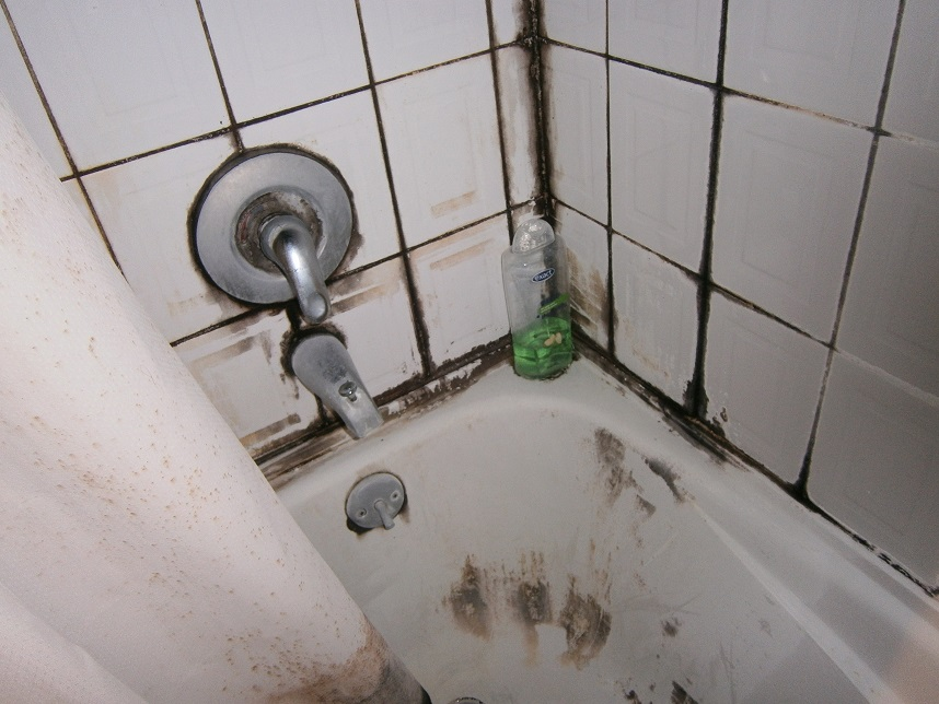 No Matter How Big Or Small We Can Help Mold In Bathrooms