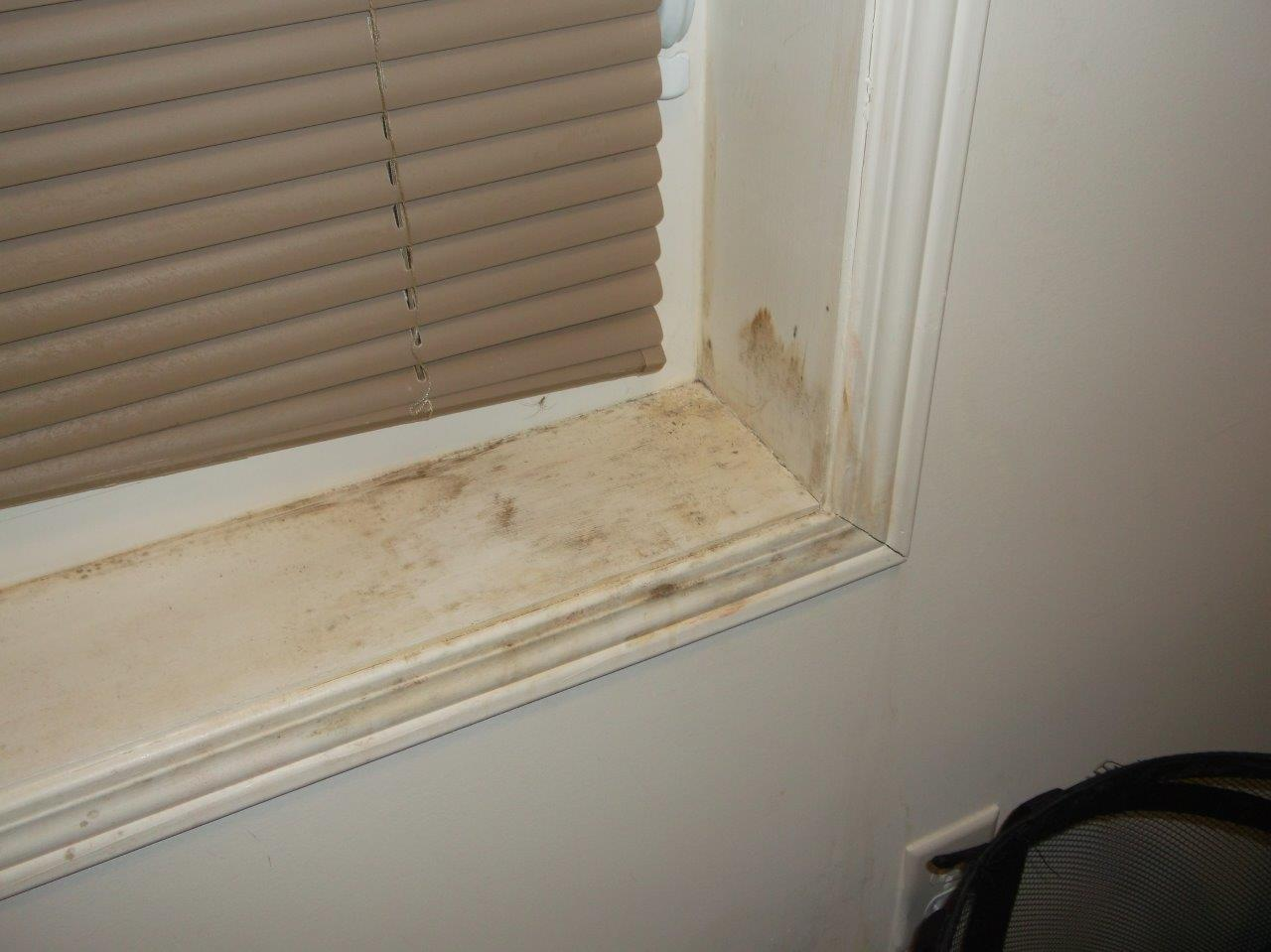Mold on Windows
