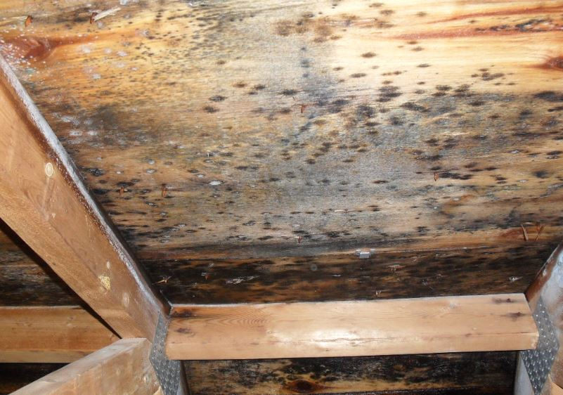 Wood Mold Removal Services