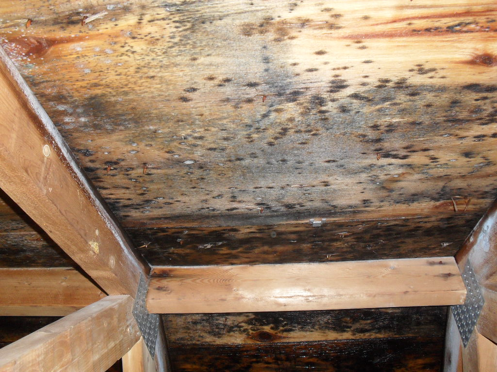 Mold Removal Services For Ceiling