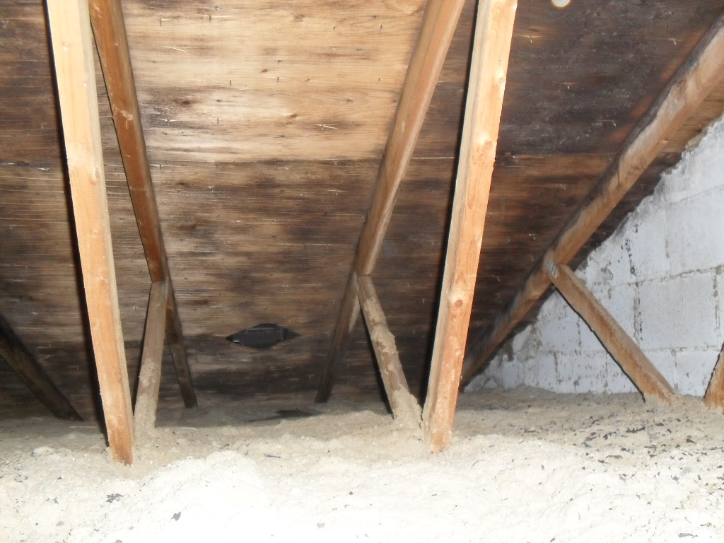 Mold Removal Services for Attic