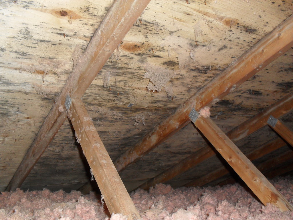 Attic Mold Removal Services