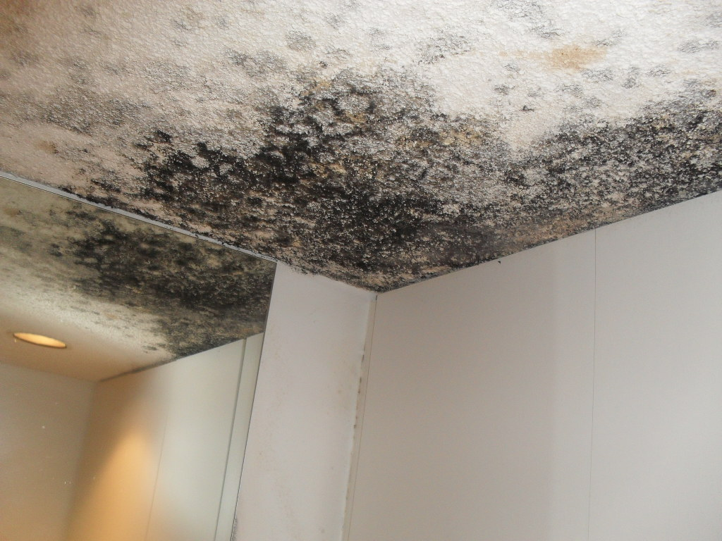 Mold in ceiling theteenline what causes mold on ceiling in bedroom best accessories home 2017 dailygadgetfo Gallery