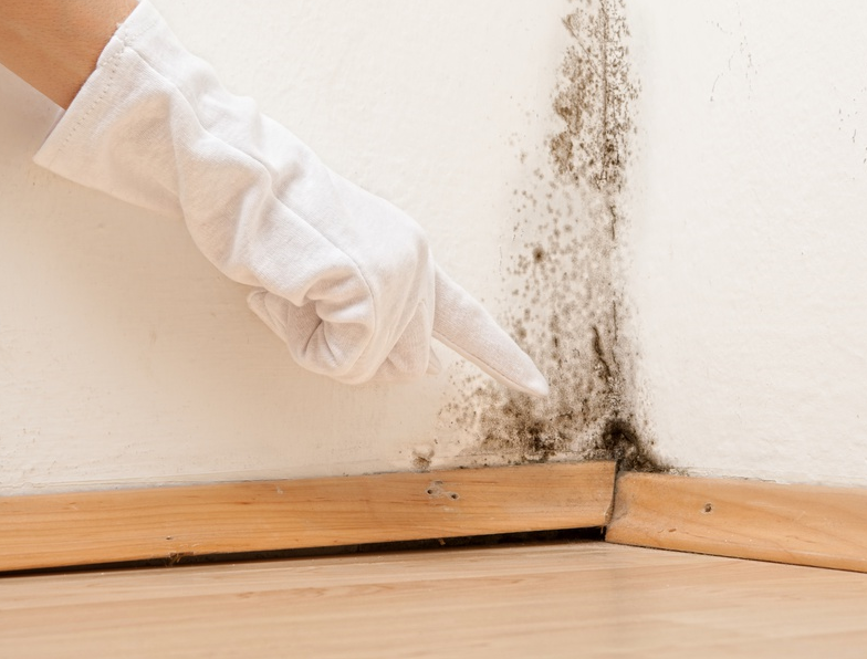 mold inspector, mold company, mold expert, professional mold removal