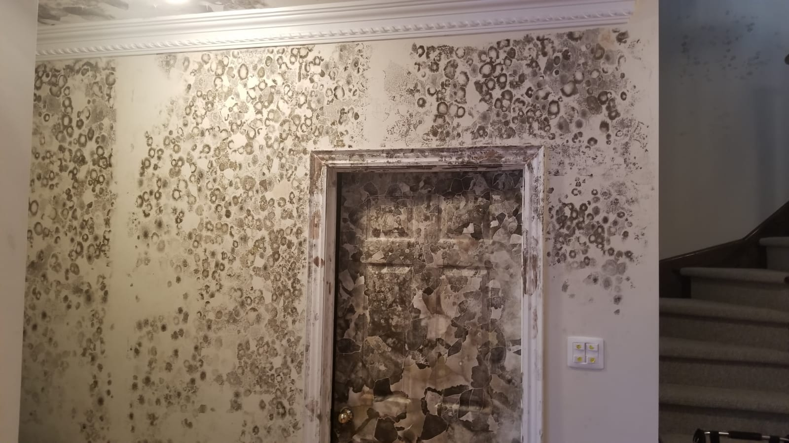 mold in burlington, mold inspection burlington, mold removal burlington