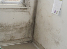 Mould Repair, Mold Removal, Mold Remediation, Mold Services